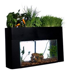 AquaSprouts Garden and fish tank