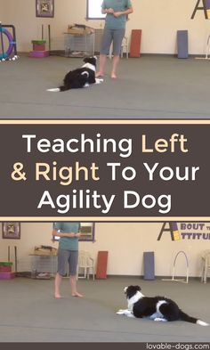 Pupy Training Treats - Eye Makeup - Teaching Left And Right To Your Agility Dog ►► // KaufmannsPuppyTra. // Kaufmanns Puppy Training // dog training // dog love // puppy love // - Ten Different Ways of Eye Makeup - How to train a puppy? Agility Training For Dogs, Dog Training Methods, Basic Dog Training, Dog Training Techniques, Training Your Puppy, Training Courses, Training Online, Potty Training, Training Schedule