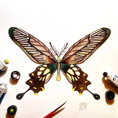 """Day 8 of my challenge #100daybutterflies #100daychallenge """"Papilio Coon"""" India, China And Indonesia!  #arts_help #art_we_inspire #imaginationarts #artdaily #craftsposure #challenge #art #painting #illustration #butterfly #handdrawnart #life #nature #phooftheday #doodle #love #colorful #rtistic_feature #featuregalaxy #creative_instaarts  #me #worldbutterflies #happy #watercolor #acrylic #paint #artist_sharing #phanasu @craftsposure"""