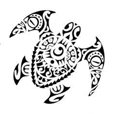 teknős_05