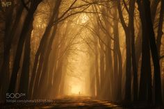 Winter Light by martinpodt. Please Like http://fb.me/go4photos and Follow @go4fotos Thank You. :-)
