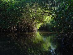 La Tovara, Nayarit paseó de manglar y cocodrilario