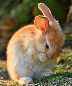 Cute Baby Bunnies, Baby Animals Super Cute, Cute Little Animals, Cute Cats, Cute Babies, Nature Animals, Animals And Pets, Funny Animals, Beautiful Creatures