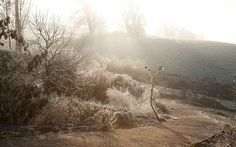Winter Skeletons – Dig Delve – An online magazine about gardens, landscape, growing & making.