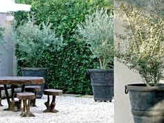 olive trees always add sophistication to a garden and their colour is just so beautiful! olive trees always add sophistication to a garden and their colour is just so beautiful! Back Gardens, Small Gardens, Outdoor Gardens, Courtyard Gardens, Potted Olive Tree, Potted Trees, Garden Trees, Garden Pots, Mediterranean Garden Design