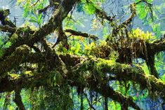 Image result for trees and vines symbiotic