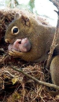 Mama and baby squirrel
