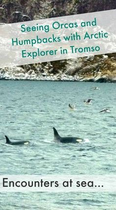 Did you know that orcas and humpbacks visit Tromso during polar night? There are several options to go on whale safari and you can find a full review of our tour with Arctic Explorer by clicking through!