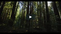 Check out this video shot in the Redwood Forest on the RED WEAPON! The WEAPON is available to RENT here at RBC! Contact us at answers@rule.com or 800-rule-com for more info!
