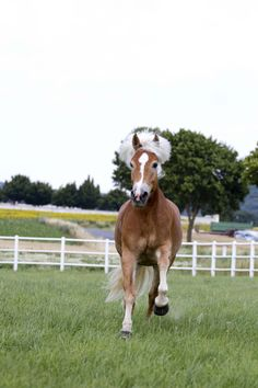 Fotoshooting mit Haflingerstute Gracia & Manuela Reidinger auf der GR-Ranch in Unterrohrbach, Österreich Portrait, Ranch, Horses, Photography, Animals, Photoshoot, Guest Ranch, Animales, Animaux