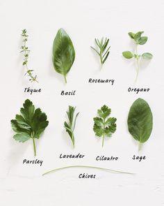 herb food - Google Search