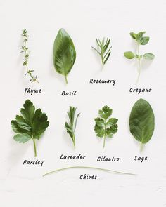 Today's tip is short and savory: grow your own herbs! This is our annual reminderfor you to check out your nearestfarmer's market or local garden center and get some herb starts. Buy them, plant them…