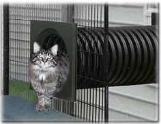 Freedom Window Door to our amazing outside SunCATcher Cat Condos and build a safe outdoor playground your felines will love