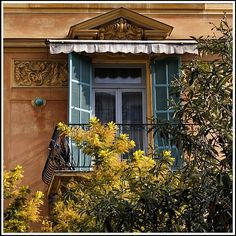 Colorfull Window: a colorful exterior with blue shutters and a yellow bush