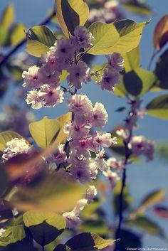 Floral_003 by PierrePocs, via Flickr