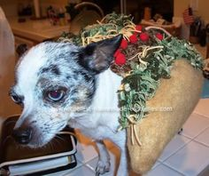 Homemade Chihuahua Chalupa Costume... This website is the Pinterest of funny Halloween costumes
