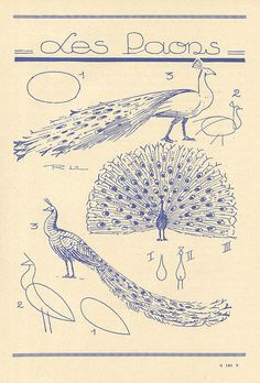 I must learn to draw a peacock! & it's in French! Je l'adore!