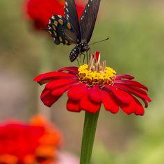 Do you have a #butterfly garden? #summer #mossmountainfarm #joy #farm #gardenchat #sharethebounty