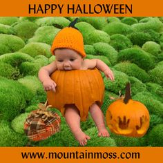 Happy Halloween from Mountain Moss. Your best choice for LIVE mosses for landscapes Moss For Sale, Pumpkin Carving, Happy Halloween, Landscaping, Mountain, Live, Landscape Architecture, Garden Design, Landscape Design
