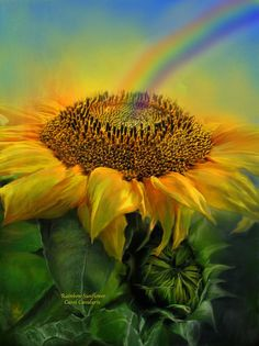 Sunflower, within your golden petals you hold all the power. This painting of a giant yellow sunflower with a rainbow arching into the center of the flower is from the 'Language Of Flowers' collection of floral art by Carol Cavalaris. Sunflower Garden, Sunflower Art, Yellow Sunflower, Happy Flowers, Beautiful Flowers, Sun Flowers, 3 Chakra, Sunflowers And Daisies, Dwarf Sunflowers