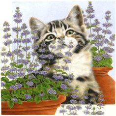 91f229b82672d Картины Anne Mortimer    Кошачий портал. Фото кошек, картинки с кошками  Animais Lindos