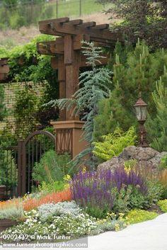Xeric garden w/ Pineleaf Penstemon, 'May Night' Salvia', 'Seafoam' groundcover rose, Sedums, 'Tiger Eyes' Sumac, 'Glauca Fastigiata' Blue Atlas Cedar frames gate