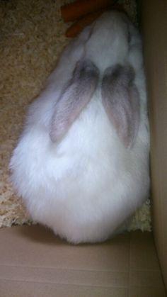 My bunny  I love her