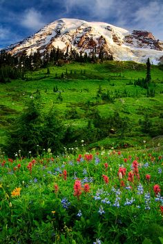 Mount Rainier National Park, 55210 238th Ave E, Ashford, WA 98304 - Subalpine wildflower meadows ring the icy volcano while ancient forest cloaks Mount Rainier's lower slopes.