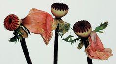 Irving Penn Flowers, Billy Kidd, Fashion Wallpaper, Wallpaper Magazine, Language Of Flowers, Planting Flowers, Poppies, Bouquet, Illustration
