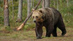 Suomen luonto tarjoaa eläimille ja kasveille runsaasti erilaisia elinympäristöjä: metsiä, soita ja vesistöjä. Monet lajit ovat sopeutuneet myös ihmisen rakentamaan ja muokkaamaan ympäristöön.