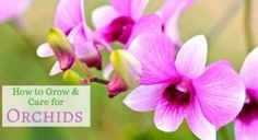 Orchids is one of the top air-purifying plants that you can grow in your home. Orchids is one o Climbing Flowers, Climbing Vines, Clematis Plants, Orchid Plants, Fruit Plants, Cool Plants, Jasmine Plant, Hibiscus Plant, Growing Orchids