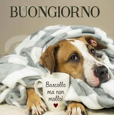 buongiorno immagini belle Good Morning Gif, Good Morning Images, Good Morning Quotes, Italian Memes, Italian Quotes, Italian Phrases, Day For Night, Good Mood, Birthday Wishes