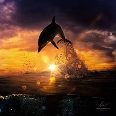 Beautiful dolphin picture art
