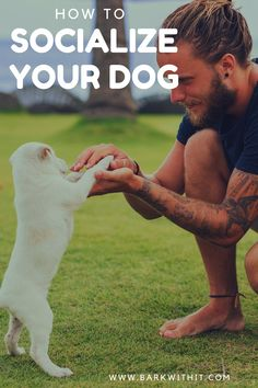 Dog socialization is important for all dogs of any age. It is best to begin when the dog is young, between 8-12 weeks old but of course any age dog can bene