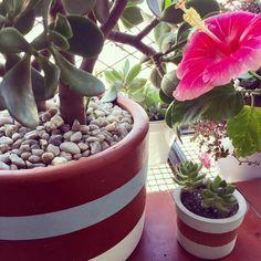 Good Morning good morning good morning... #oitominhocas #succulent #suculenta #maisverde #maiscor #floweroftheday