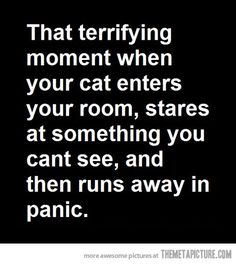 My cats do this all the time