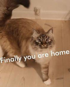 Funny Cat Memes, Funny Cat Videos, Kitten Gif, Cat Gif, Cute Cats And Kittens, Kittens Cutest, Cute Funny Animals, Cute Baby Animals, Funny Cats And Dogs