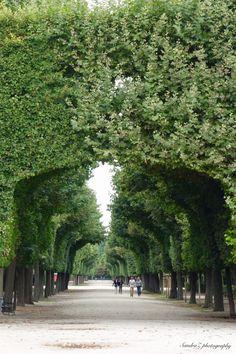 Schonbrunn Gardens -SandraZ
