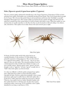More about Oregon spiders :  hobo, giant house, black widow, and yellow sac spiders, by the Oregon State Department of Agriculture, Plant Division