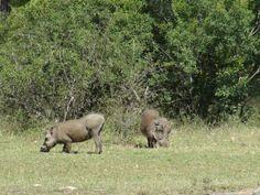 http://www.naturescanner.nl/afrika/zuid-afrika