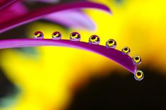 macro photography water - Google Search