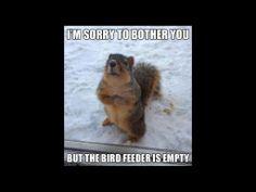 Well mannered squirrel