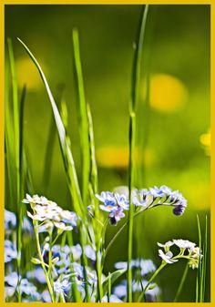 #kukkia #nature #luonto #kesä #summer #natural #photography #valokuvaus #painting #poster #green #vihreä luonto #flowers #summer flowers #macro