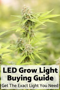 Finding the best LED grow light for your needs is a daunting task. The groundbreaking PoCoCo Method guides you through the decision process to ensure you get the right light for your plants at the right price. Weed Facts, Marijuana Facts, Cannabis Plant, Growing Weed, Cannabis Growing, Best Led Grow Lights, Plant Lighting, Medical Cannabis, Humor