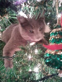 Cat in the Christmas Tree