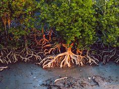 Lothian Island Wildlife Sanctuary - in West Bengal, India