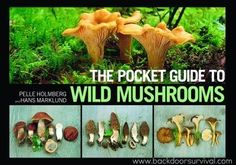 The Pocket Guide to Wild Mushrooms + Giveaway | Backdoor Survival
