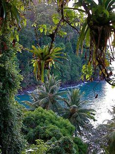 Onomea Bay, Big Island of Hawaii.                              …