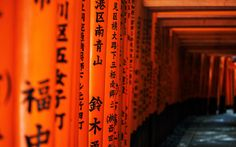 Japan Kyoto torii gates pathway Japanese architecture Fushimi Inari Shrine wallpaper | 2560x1600 | 63682 | WallpaperUP