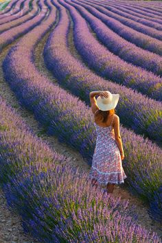 gyclli:  Young woman in lavender field  corbisimages.com